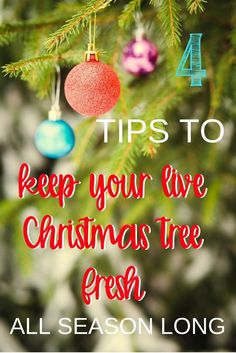 Real live Christmas trees make the holiday season magical! These 4 tips are sure to keep your evergreen tree fresh all season long.
