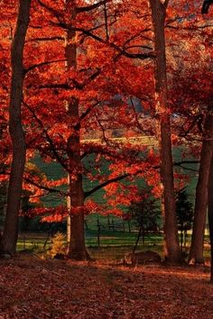 scarlet autumn