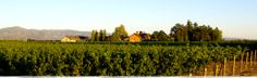 Trefethen Family Vineyards - Main Ranch Vineyard