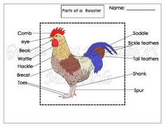 Printables: Label the parts of a Rooster