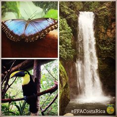 that FFA proficiency and star finalists have an opportunity to travel to Costa Rica? Career Success, Ffa, Pretty Cool, Costa Rica, Opportunity, Waterfall, Cool Stuff, Stars, Nature