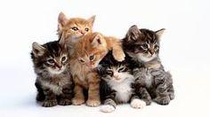 Resultat d'imatges de wallpaper cat
