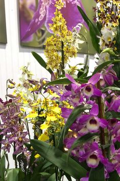 Orchid varieties like their space. Still a pretty picture to sell them all.