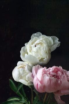 Isn't this stunning?  Three Peonies a Still Life by lucysnowephotography on Etsy, $30.00