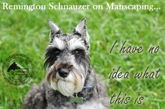 Remington Schnauzer on Manscaping... www.fixyourimages.com