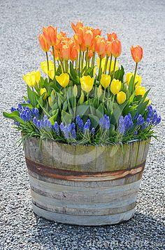 Tulip barrel planter by Iperl, via Dreamstime