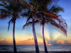 As the sun comes up this Tuesday, the palm trees smile on Fort Lauderdale beach. Image from @FtLauderdaleSun