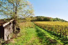 Chemin dans les vignes à Bonneville / Trail in the vineyards in Bonneville