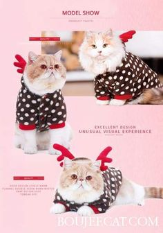 Christmas Polar Fleece Thermal for Cats Cat Christmas Costumes, Christmas Cats, Allergic To Cats, Cat Drinking, Warm Outfits, Getting Cozy, Polar Fleece, Cat Life, Hot Chocolate