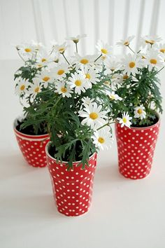 daisies and polka dots.  Two of my favorite things!!