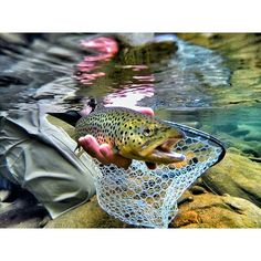 The number one resource for Fishing gear and information Pike Fishing, Best Fishing, Trout Fishing, Fishing Lures, Fly Fishing, Alaska Fishing, Kenai River, Channel Catfish, Drop Shot Rig