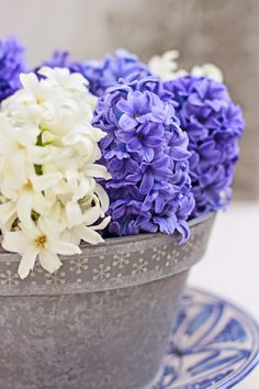 Of Spring and Summer: A Bunch for the Weekend - # 42 - Blue and White Hyacinths