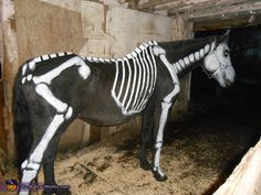 homemade horse costumes | Ms Bones - Homemade costumes for pets