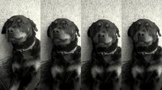 My puppy, Zeus <3