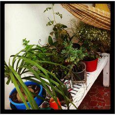#Meu jardim #My Garden