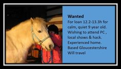 Unfortunately the website for Rehome My Horse has had to close My Horse, Horses, Wanted Ads, 9 Year Olds, Searching, This Is Us, Platform, Pop, Website