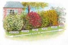Collection 'la haie des quatre saisons'( boule de neige, viorne rose, weigela, : achat/vente arbres & arbustes - Willemse jardin