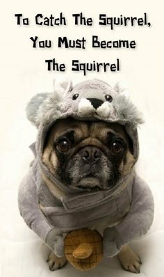 So not gonna happen. Too short. Squirrels go up trees and pugs just think they disappeared.