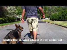 1-Year Old German Shepherd with some aggression issues! German Shepherd ...