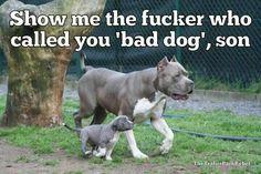 Who called you a bad dog???!!!!! I'LL KILL HIM!!!!!!