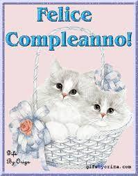 Image result for buon compleanno gatto