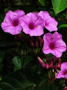Amazon Rainforest Plants and Flowers | are fascinating plants of the Ecuador Amazon rainforest with flowers ...