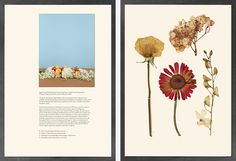 Taryn Simon's world-changing floristry at the Gagosian | Wallpaper* Magazine