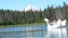 Inflatable swan - Frog Lake, Mt. Hood National Forest