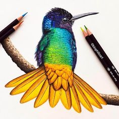 and we're celebrating by GIVING AWAY this beeeeeauuuuutiful original drawing from . Pencil Drawings Of Animals, Bird Drawings, Cool Drawings, Drawing Animals, Colored Pencil Artwork, Color Pencil Art, Pencil Shading, Colored Pencils, Watercolor Sketchbook