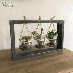 $10 DIY Succulent Frame