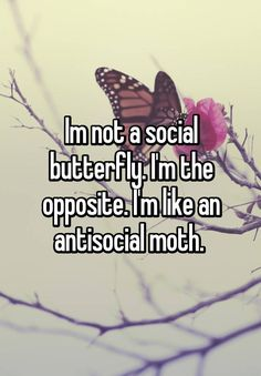 """Im not a social butterfly. I'm the opposite. I'm like an antisocial moth. """