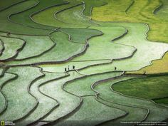 Terrace rice paddy photo among the best in the National Geographic Photo Contest   A photo of terraced rice fields by photographer Nguyen Quynh Anh has been named among the top photographs in the evaluation round of the 2015 National Geographic Photo Contest.    Vietnam Tour Expert Help: www.24htour.com Halong Bay Cruises Tour  Expert Help: www.halongcruises.com.au  #24htour  #‎vietnamtravelnews‬ ‪#‎vietnamnews‬ ‪#‎traveltovietnam‬ ‪#‎vietnamtravel�