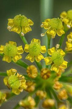 #flora #golden