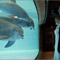 National aquarium baltimore wedding