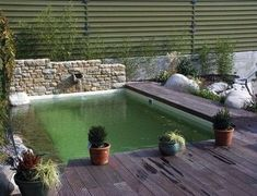 Swimming Pool Designs, Swimming Pools, Outside Pool, Biologique, Cool Pools, Outdoor Furniture, Outdoor Decor, Succulents, Photos