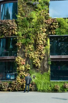Green Wall at the Mu Green Architecture, Landscape Architecture, Landscape Design, Architecture Design, Residential Architecture, Contemporary Architecture, Facade Design, Wall Design, Green Facade