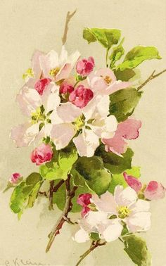 Catherine Klein: Apple Blossoms