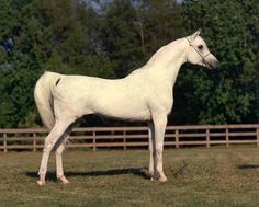 Prince Fa Moniet Theegyptianprince x Fa Moniet 1981 - 1999