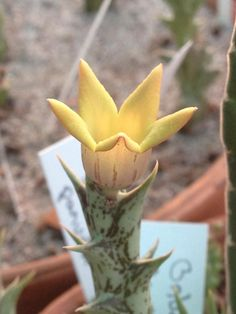 Amazing Unusual Plants To Grow In Your Garden Weird Plants, Plants, Succulents, Beautiful Flowers Garden, Amazing Flowers, Beautiful Flowers, Cactus Plants, Unusual Plants, Planting Succulents
