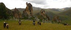 Mongolian horse trek