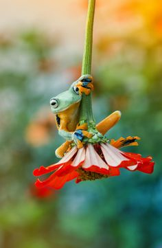 creatures great and small from all over the world, with a tad of nature ❀ Cute Creatures, Beautiful Creatures, Animals Beautiful, Funny Frogs, Cute Frogs, Cute Baby Animals, Funny Animals, Frog And Toad, Frog Frog