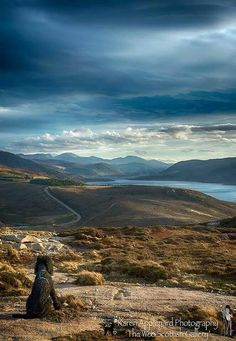 McBasil (a standard poodle) Taking In The View of Loch Broom and Ullapool, Ross-shire, Scotland. http://karenappleyard.photoshelter.com/image/I0000.wbpQw9AUxM