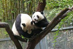 It's my hammock! | Yunior tries to get Momma off his hammock… | Rita Petita | Flickr