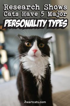 A recent study was conducted by Dr. Lauren Finka of the University of Lincoln. In the study, she interviewed roughly 200 cat owners to get an idea about the personalities of their feline friends… I Love Cats, Crazy Cats, Cool Cats, Cute Kittens, Cats And Kittens, Garfield, Cat Hacks, Gatos Cats, Cat Behavior