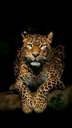 Download #Leopard #iPhone #Wallpapers. Leopard wallpaper HD, desktop #backgrounds, #iPhone wallpaper, images, pictures and desktop wallpaper. #free