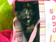 How to Throw a Kitten Shower | It sounded a little ridiculous... But as I read the article, it sounded better and better. Very cute idea. A new pet is a part of the family and should be celebrated. :3