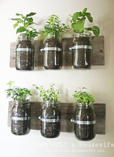 Mason Jar Wall Planter {mason jar} ~ Learn how to create an adorable indoor or outdoor wall planter. These jars would look so cute on a kitchen wall filled with herbs! You can make your own wall planter by using mason jars, an old board, and pipe clamps. Mason Jar Herbs, Pot Mason Diy, Mason Jar Herb Garden, Mason Jar Planter, Herbs Garden, Pots Mason, Garden Terrarium, Plants In Mason Jars, Tea Herbs