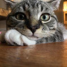 My Cat! http://ift.tt/2wH5EQ1