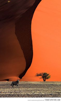 Oryx at the base of a sand dune…BelAfrique your personal travel planner - www.BelAfrique.com