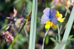 Unterwegs im Müritz Nationalpark | Schmetterlinge im Spätsommer an der Müritz (c) Frank Koebsch (3)